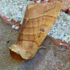 Daily Moth